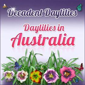 Logo of Daylily.jpg